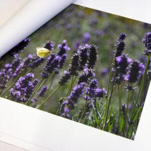 Foto op los canvas doek 60x150 cm
